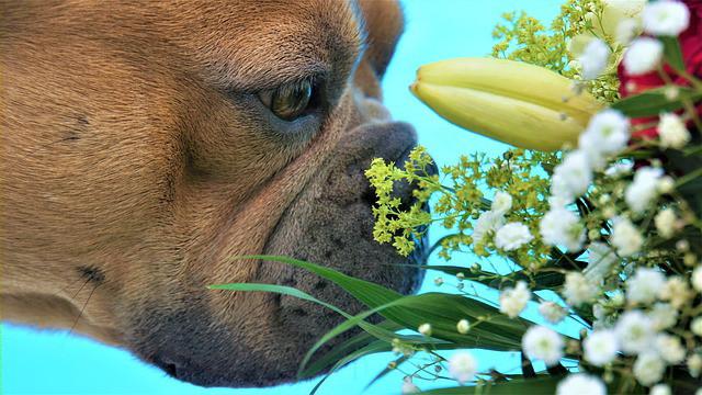 実践した私がすすめる!!犬の肛門腺がついた布製品のにおいを簡単に消す方法!!